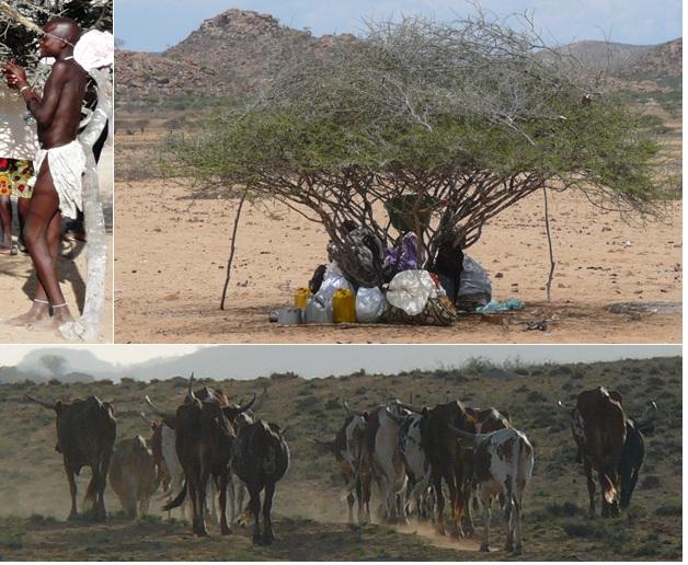 Atividades de pastoreio no deserto de Namibe (Fotos: Ilka B. Leite)